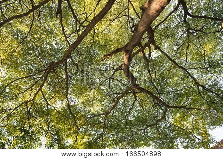 A view underneath the tropical rainforest tree in the park Nature background.