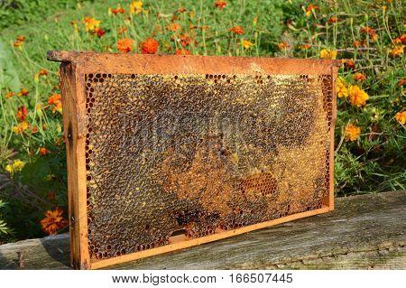 Full of fresh pure honey honeycomb. Pure Bee Honeycomb with Honey.