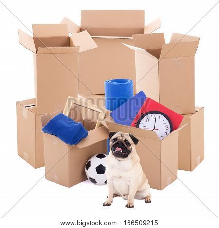Moving Day Concept - Brown Cardboard Boxes And Pug Dog Isolated On White