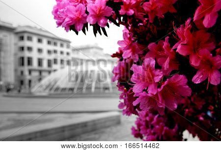 plant pink flower talking greyness of a town square