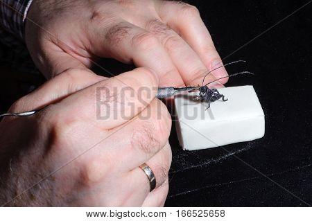Miniature Of Bug Playing Violin