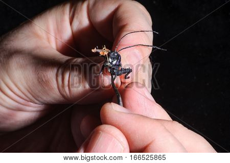 Miniature Of Bug Playing Violin