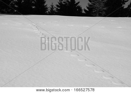 black and white photo of line of strange round footsteps on the snow plain in winter