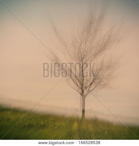 blurred background lonely tree in fog pink