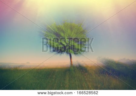 blurred background landscape with green tree pink