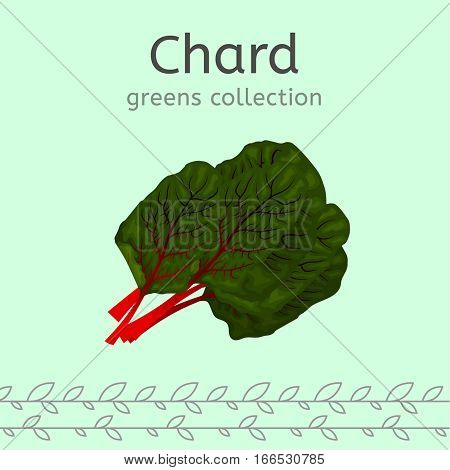 Green chard leaves on a light background. Greens collection. Vector illustration.