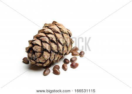 pine cones and nuts isolated on white background