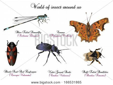 It is illustration of world of insect around us.
