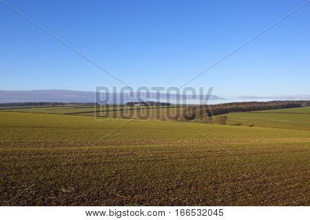 Undulating Wheat Fields