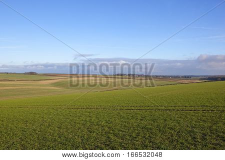 Wheat Fields And Wind Turbine