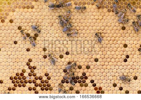 Solid capped brood pattern with random patches of open brood and honey bees.