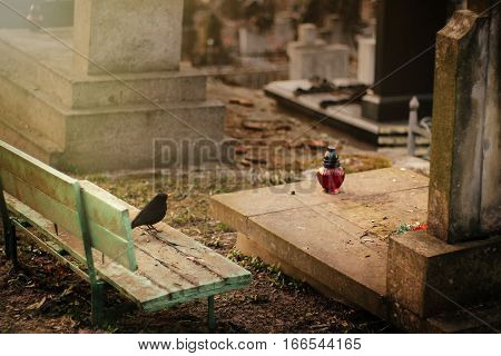 Bird Sitting At Old Stone Tomb On Grave On Ancient  Cemetery