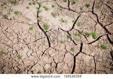 Background of cracked earth in dry weather with little bushes of grass