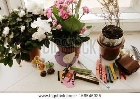 windowsill with beautiful different house plants and chancellery and details for children games
