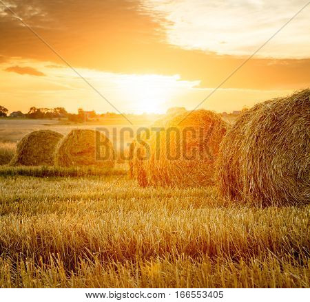 Summer Farm Field with Hay Bales on the Background of Beautiful Sunset. Agriculture Concept. Haystack Scenery. Toned and Filtered Photo with Copy Space.