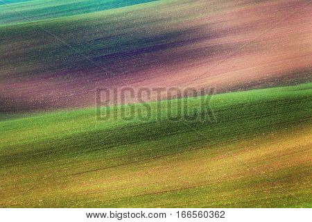 Colorful Fields In The Evening In South Moravia