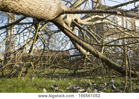 Storm cyclone tree elm orme fall down damage France