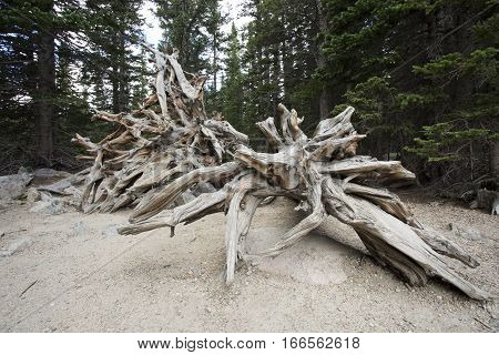 Tree Skeleton with Jutting Branches on the Ground