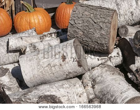 Birch wood log pile next to pumpkins