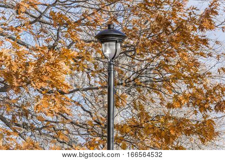 Ornate black iron lamp post amidst autumn oak trees with vibrant orange leaves blowing in the wind