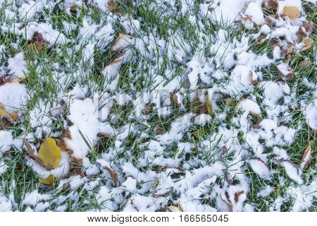 Green grass covered in autumn fallen leaves and light dusting of snow