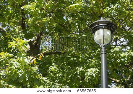 Ornate lamp post against vibrant green tree branches