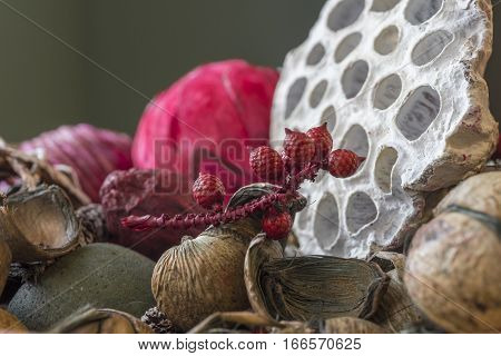 Dried seeds pods nuts combs and berries closeup aromatic potpourri textures