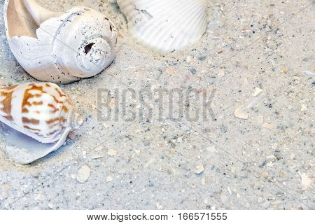 Three tropical shells on sandy beach vacation background border upper left corner