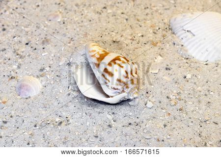 Spiral and clam shells on a warm beach vacation destination