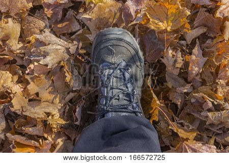 Hiking boot on person walking through autumn leaves thickly covering the ground