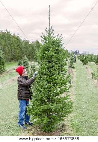 Boy inspecting a Christmas tree on a tree farm looking for the perfect one