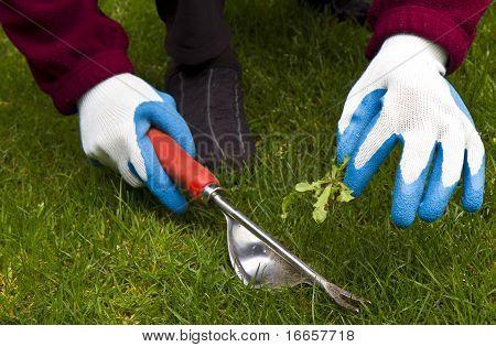 Hand Weeding