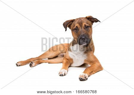 Young Mixed Breed Dog