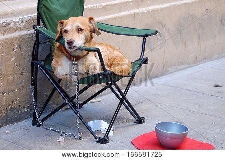 Lonely dog on chain waiting for his master in a folding chair in Malaga