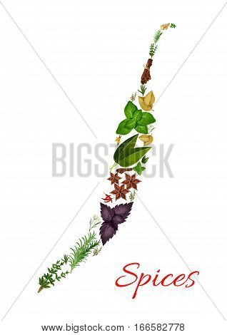Spices in shape of chili pepper. Rosemary and thyme, basil, dill and parsley, sage and bay leaf, anise and oregano, ginger and vanilla with mint, cinnamon, tarragon, cumin and chili pepper. Vector herbal and spicy seasonings and herbs condiments