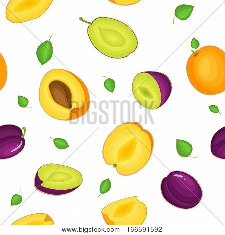 Seamless vector pattern of ripe plum apricot fruit. White background with delicious juicy plums apricots whole leaf slice half. Vector fresh fruit Illustration for printing on fabric, textile design