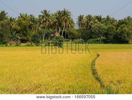 Landscape Of Countryside In Mekong Delta, Vietnam