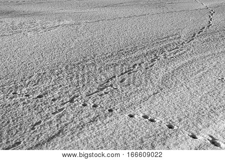 winter background landscape or texture of snow and traces on snow on a glade of monochrome tone