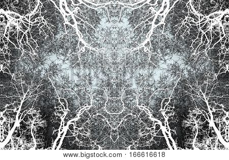 symetrical  composition of trees in winter, surreal trees, abstract surrealism, branches, color negative,