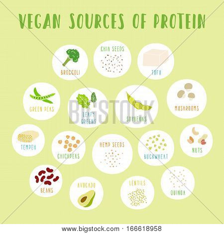 Vegan sources of protein. Vector info poster.
