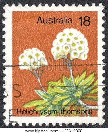 MOSCOW RUSSIA - CIRCA DECEMBER 2016: a post stamp printed in AUSTRALIA shows Helichrysum Thomsonii plant the series