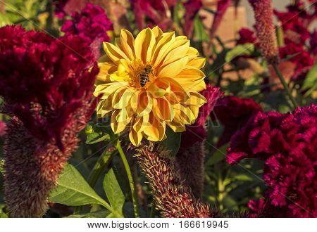 Beautiful flowers on the flowerbed of Armenia