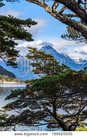 Tree in front of the Beagle channel at Terra Del Fuego National Park Ushuaia