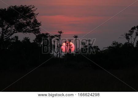 Sunset at the Kissama National Park in Angola