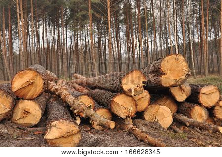 Forestry clearance and storage timber. Forest management.