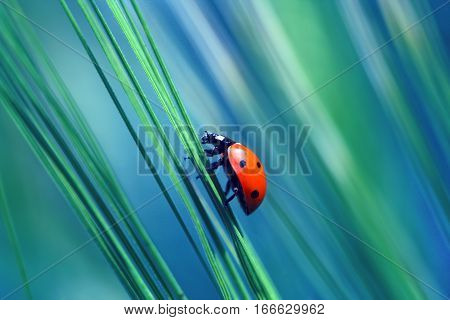 Ladybug found in the grass and looking for food