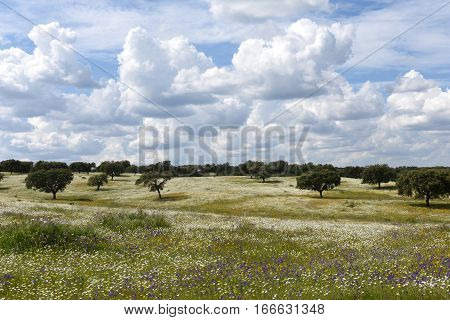 Spring landscape of Alentejo landscape between the village of Redondo and Vila Vicosa Alentejo region Portugal