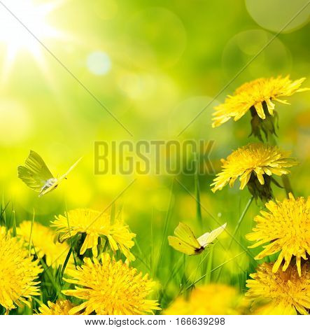 spring flower background; fresh flower and yellow butterfly on green grass background