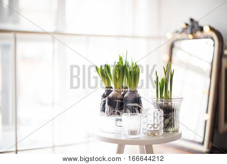 White scandinavian spring interior, hyacinths in a jar closeup, minimalist room decor in backlight