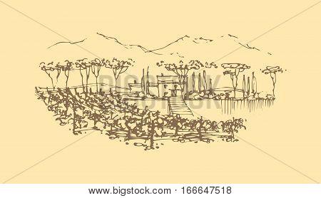 Vector illustration. Vineyard landscape with a villa. Wine label design.
